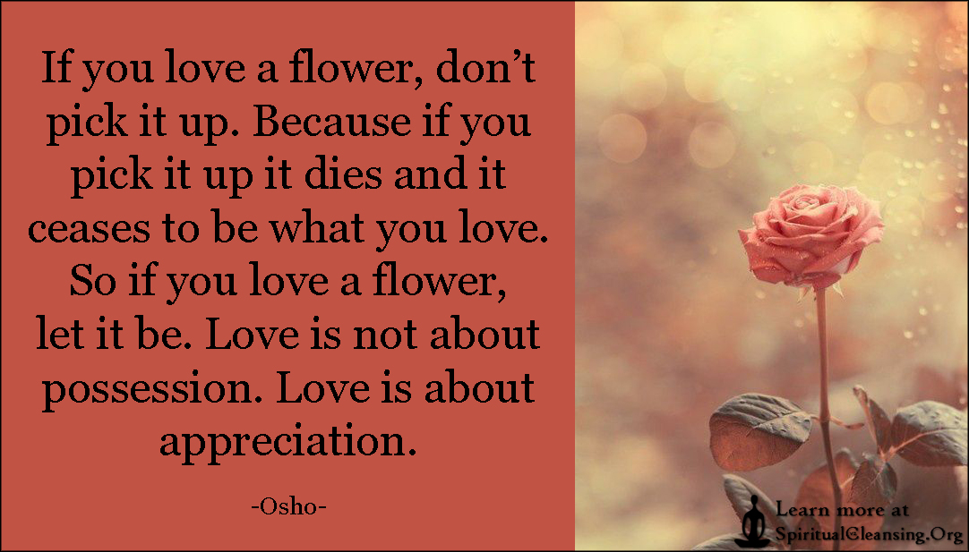 If You Love A Flower Dont Pick It Up Because If You