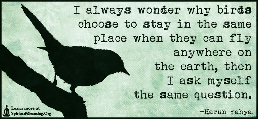 I always wonder why birds choose to stay in the same place when they can fly anywhere on the earth, then I ask myself the same question.