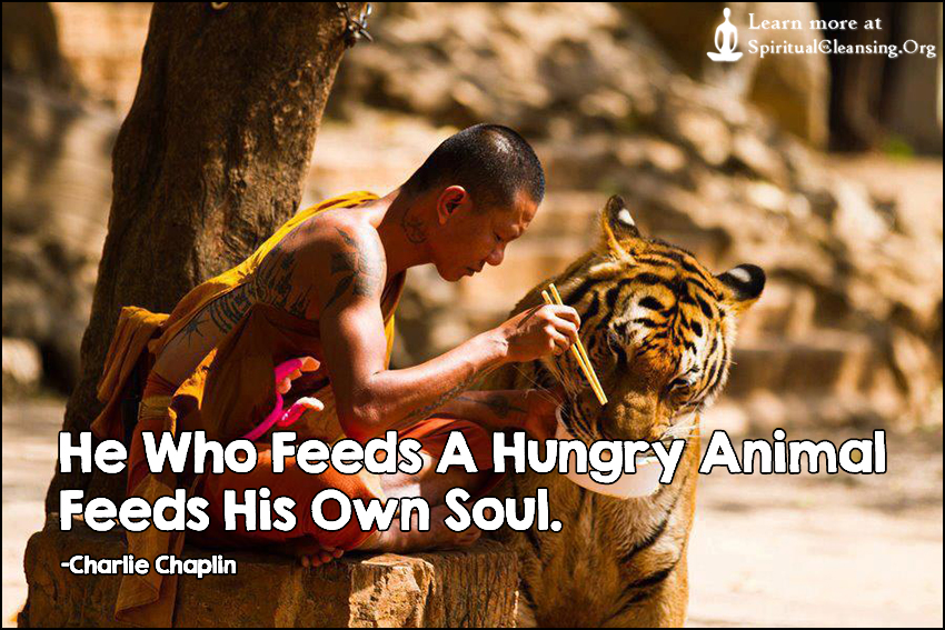 He Who Feeds A Hungry Animal Feeds His Own Soul.