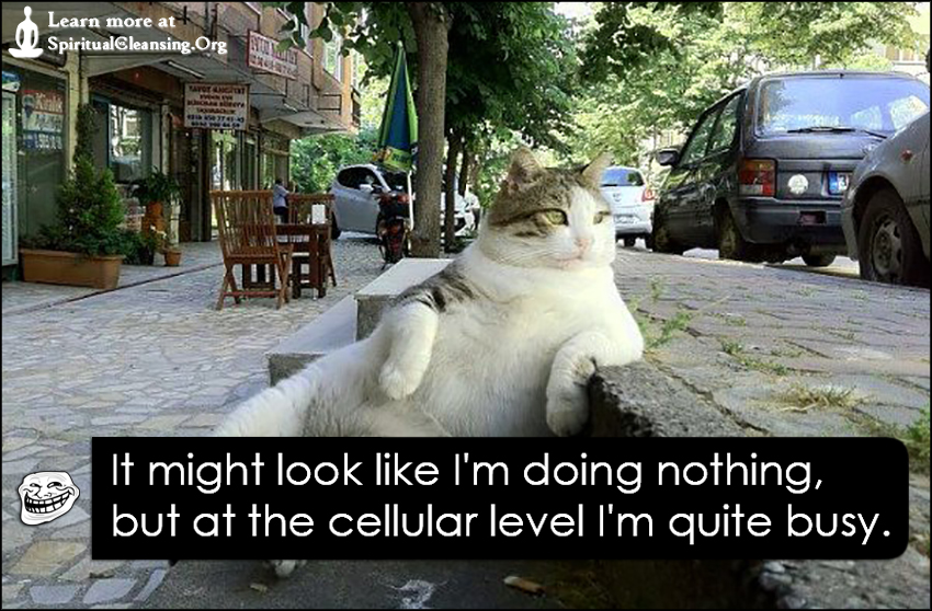 It might look like I'm doing nothing, but at the cellular level I'm quite busy.