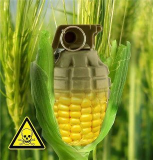 Danger from GMO food