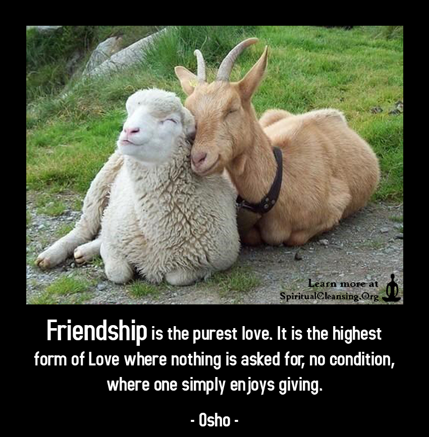 Friendship is the purest love. It is the highest form of Love where nothing is asked for